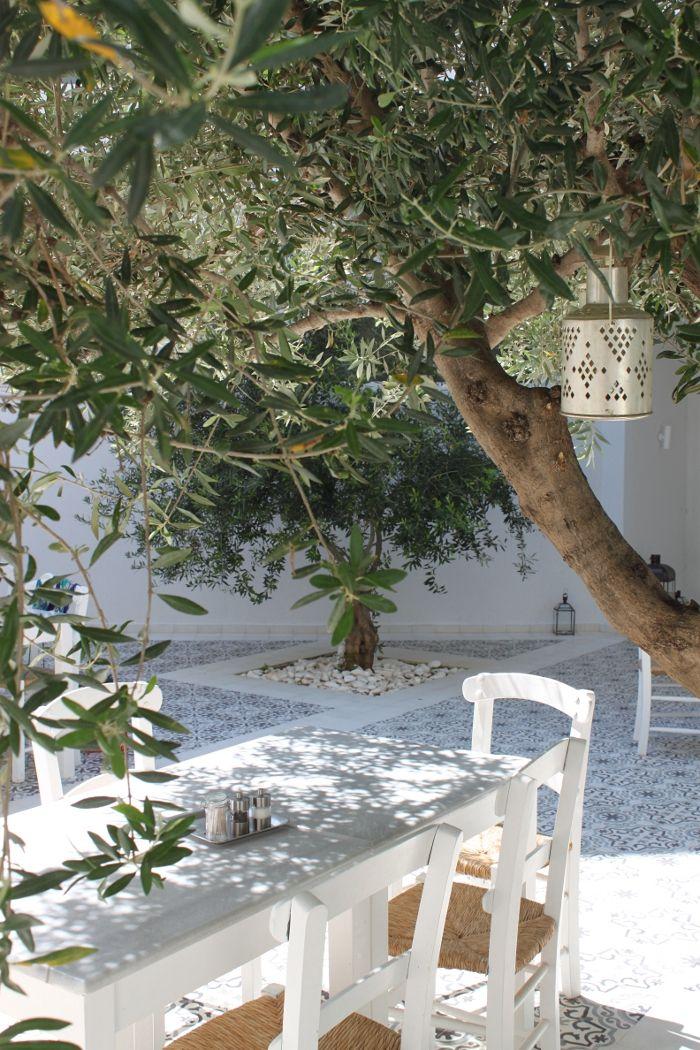 patio_mediterraneo_tradicional_olivo